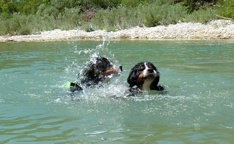 quels animaux ne savent pas nager